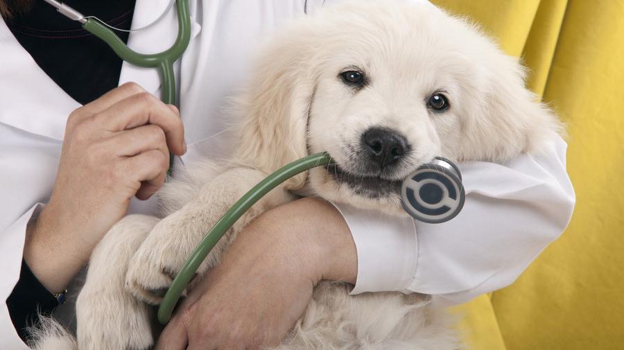 動物と衝突事故を起こしてしまったら、保護して病院へ運んであげよう。