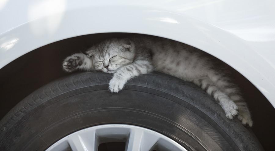 猫バンバン/気づかず眠っている猫もいるかもしれない。
