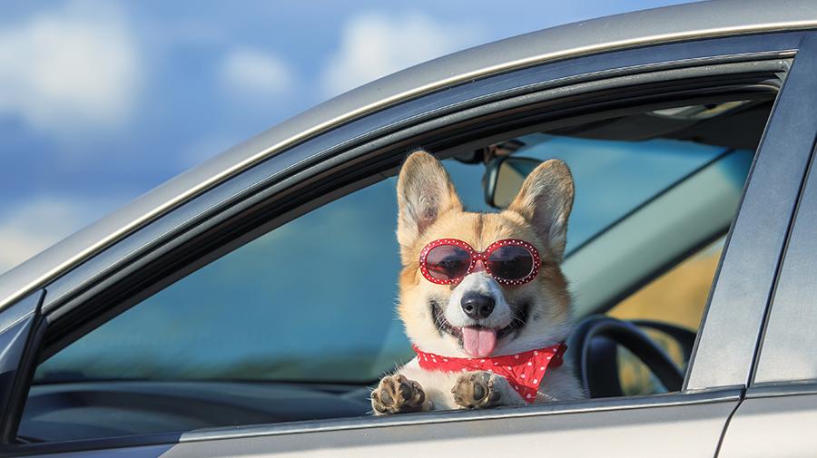 愛犬とドライブに出かけるイメージ写真