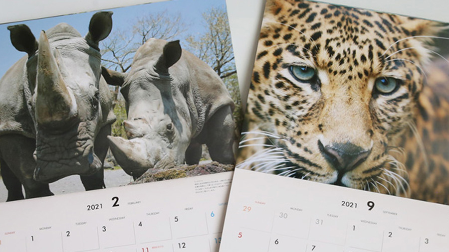 富士サファリパーク 2021年版 カレンダー キャンペーン プレゼント フォロー&リツイート 2月と9gatu