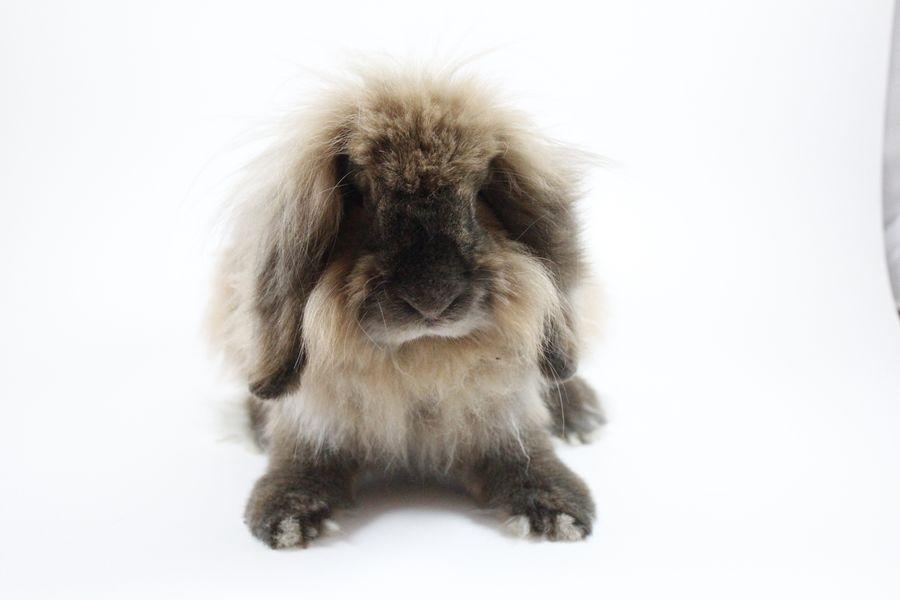富士サファリパーク|ウサギ|くるくら