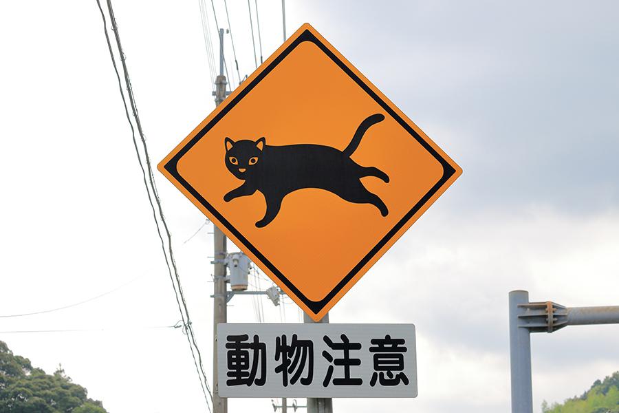 動物注意「ネコ」